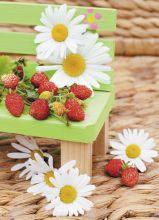 Aromatic strawberry
